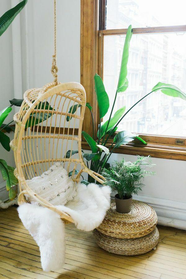 schöne zimmerpflanzen pflegeleicht bilder rattanmöbel ...
