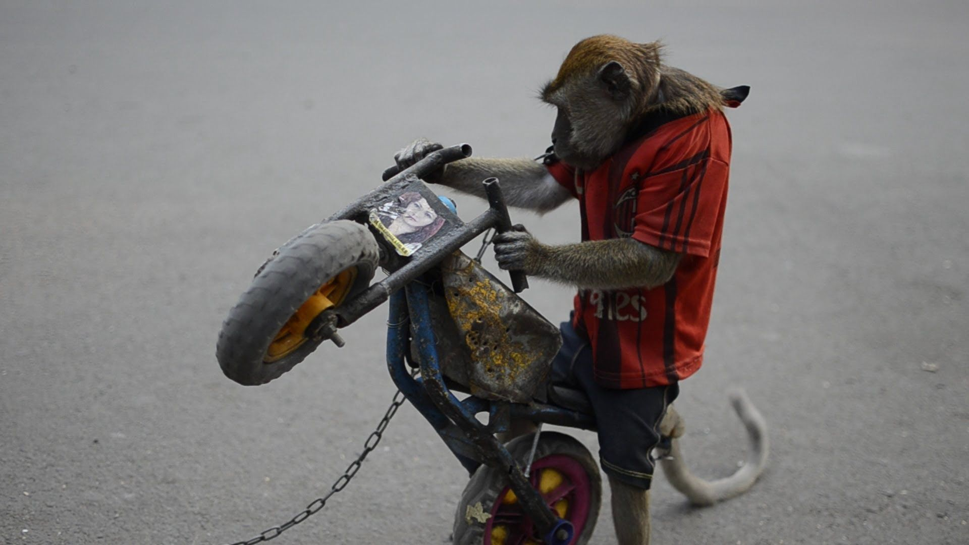 Monkey Riding Toy Motorcycle In Jakarta Indonesia Ride On Toys