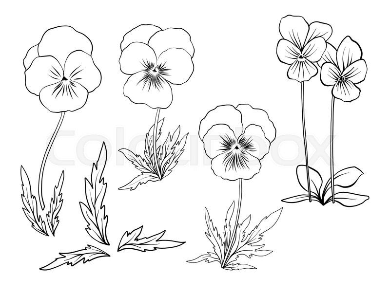 Violet Flowers Set Of Outline Flowers Stock Line Vector Violet Flower Tattoos Flower Sketches Flower Drawing