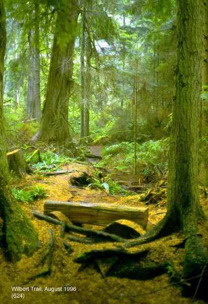 Old growth forest, South Whidbey State Park