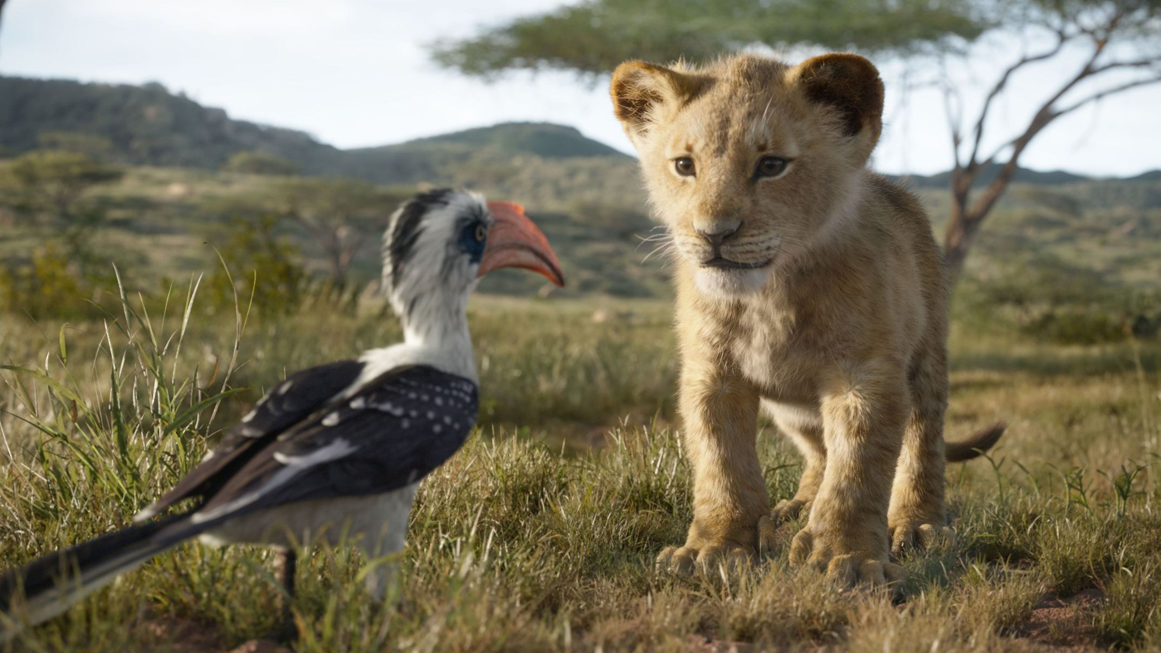 The Lion King Simba 4k The Lion King Wallpapers Simba Wallpapers Movies Wallpapers Lion Wallpapers Hd Wallp Lion King 2019 Lion King Remake Lion King Movie