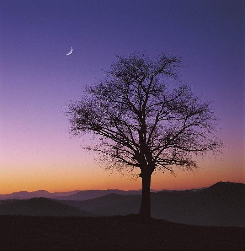 """M. Chiapponi, Italy, """"Albero e Luna al tramonto"""""""