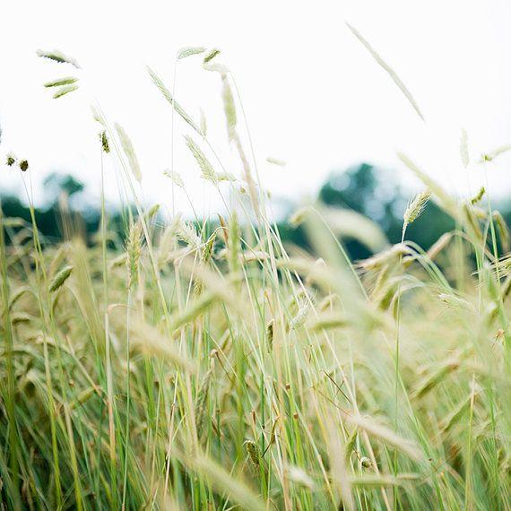 Spring Grasses, Soft Green Art,Nature, Landscape, Art, Photography, Fine Art…