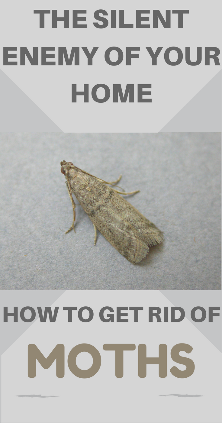 3256610bc428a08a2da0405c87c885e5 - How To Get Rid Of Pantry Moths And Larvae