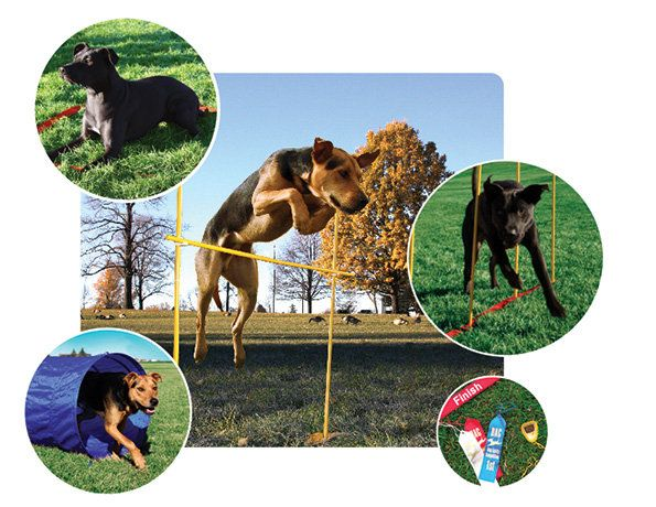The Dog Agility Kit Includes Multiple Obstacle Course Accessories
