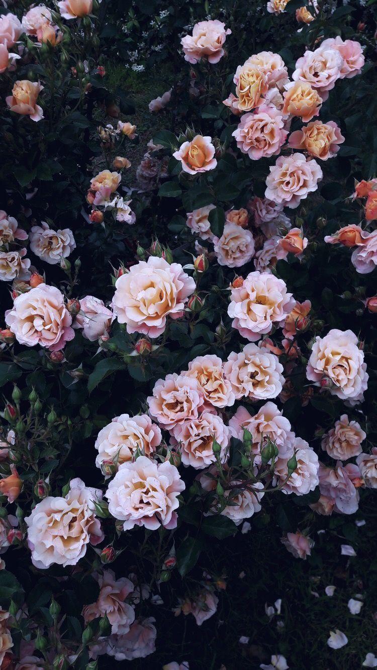 Pin Di Natalia Prutko Su Wallpaper Flower Wallpaper Nature Iphone