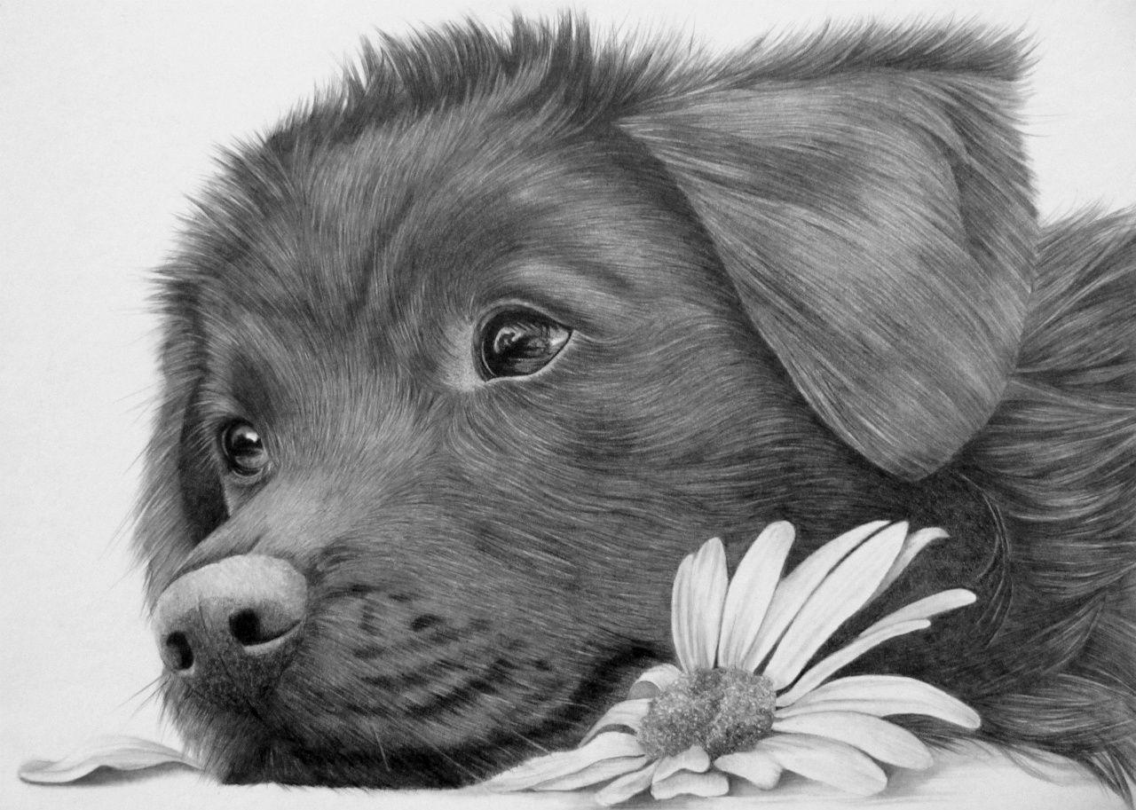 Honden Portret Www Mogroen Nl Dog Drawing Graphite Drawings Art
