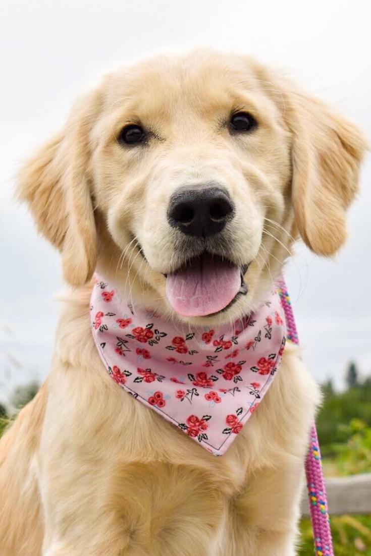 Floral Dog BandanaPink Dog BandanaDog BandanaSummer Dog Bandana