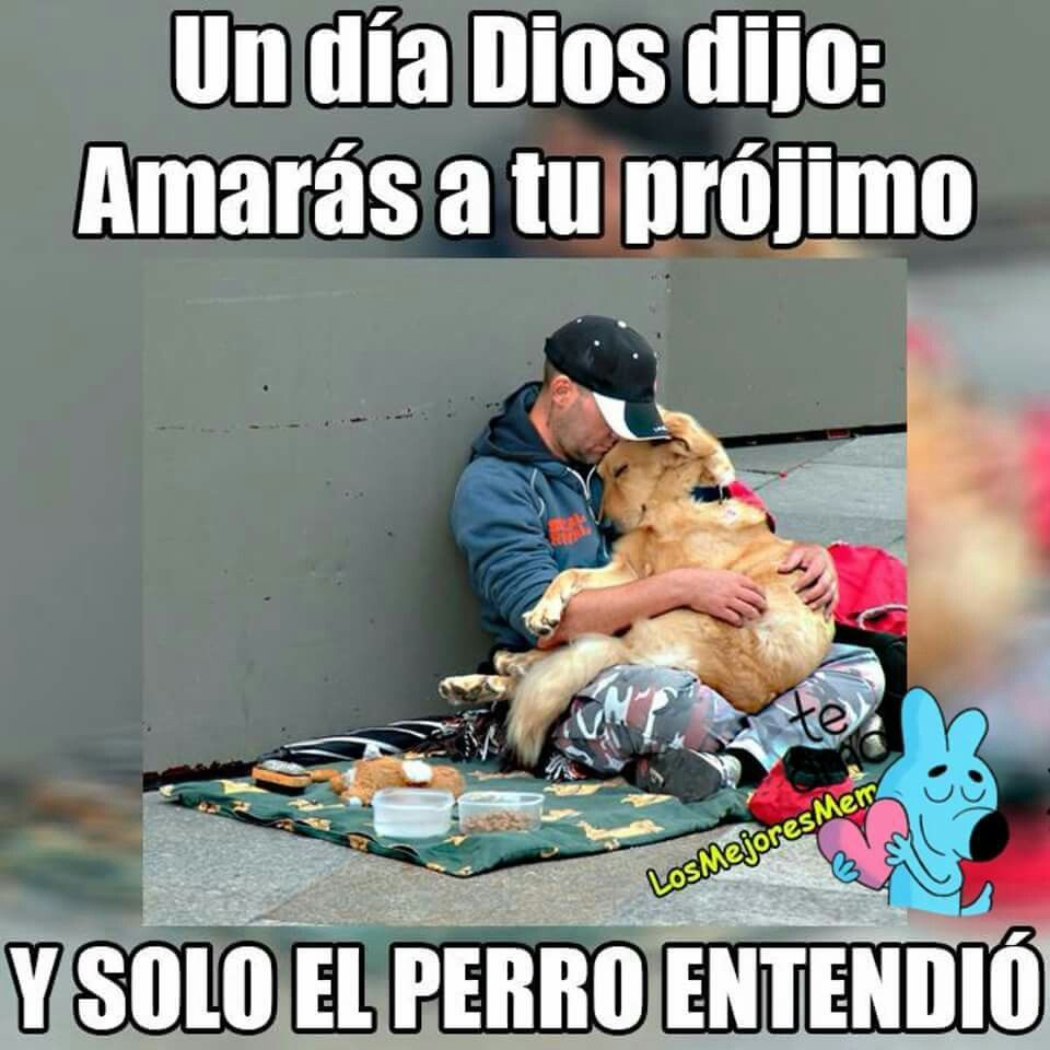 Projimo Perros Frases Perros Tristes Animales Frases