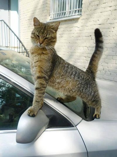 Hello There Gorgeous Th September Pose Stretches And Cat - 32 adorable photos cats growing