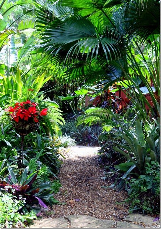 The Gravel Path Layered Plants House Ideas Tropical