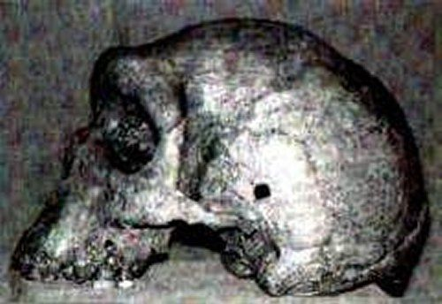 Prehistoric Skulls With Bullet Holes - An Unsolved Ancient Mystery - Who Shot Them? - MessageToEagle.com