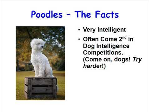 Facts about Poodles