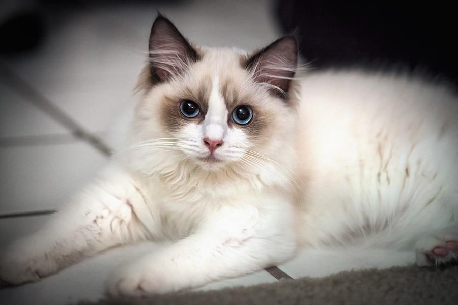 What a beautiful cat! - Imgur