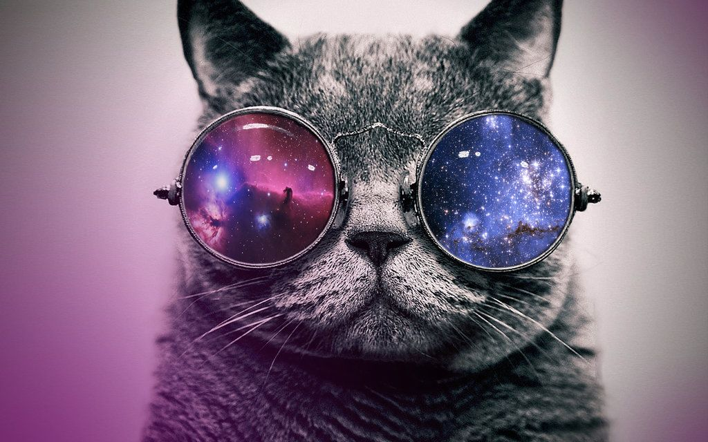 Can Your Cat See Into Other Dimensions? Glasses