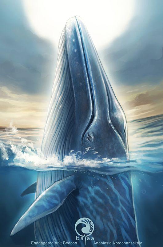 Baleia Azul | No fundo do mar em 2019 | Arte baleia ...