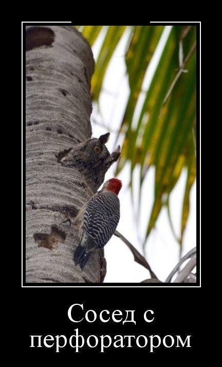 Демотиваторы 09.05.2016   Смешные фотографии животных ...