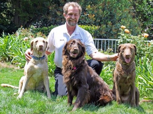Mark Tipton Angel Dogs Training Dog Training Dog Leash Training