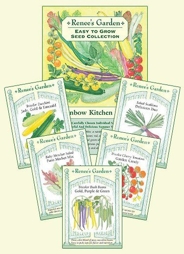 The Rainbow Kitchen Vegetable Garden