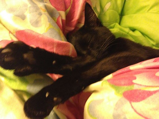 Caturday.......THIS is how you do it! Submitted by: Amy Jackson #cats