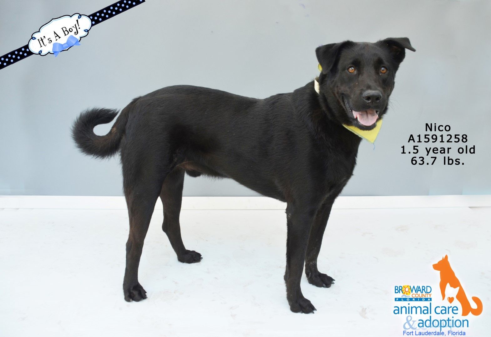 Pin on Dogs for Adoption Broward County