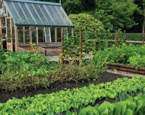 Vegetable garden design kitchen garden pinterest for Kitchen vegetable garden plans