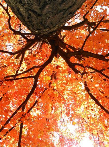 Fall's fantastic colors shine through a tree.