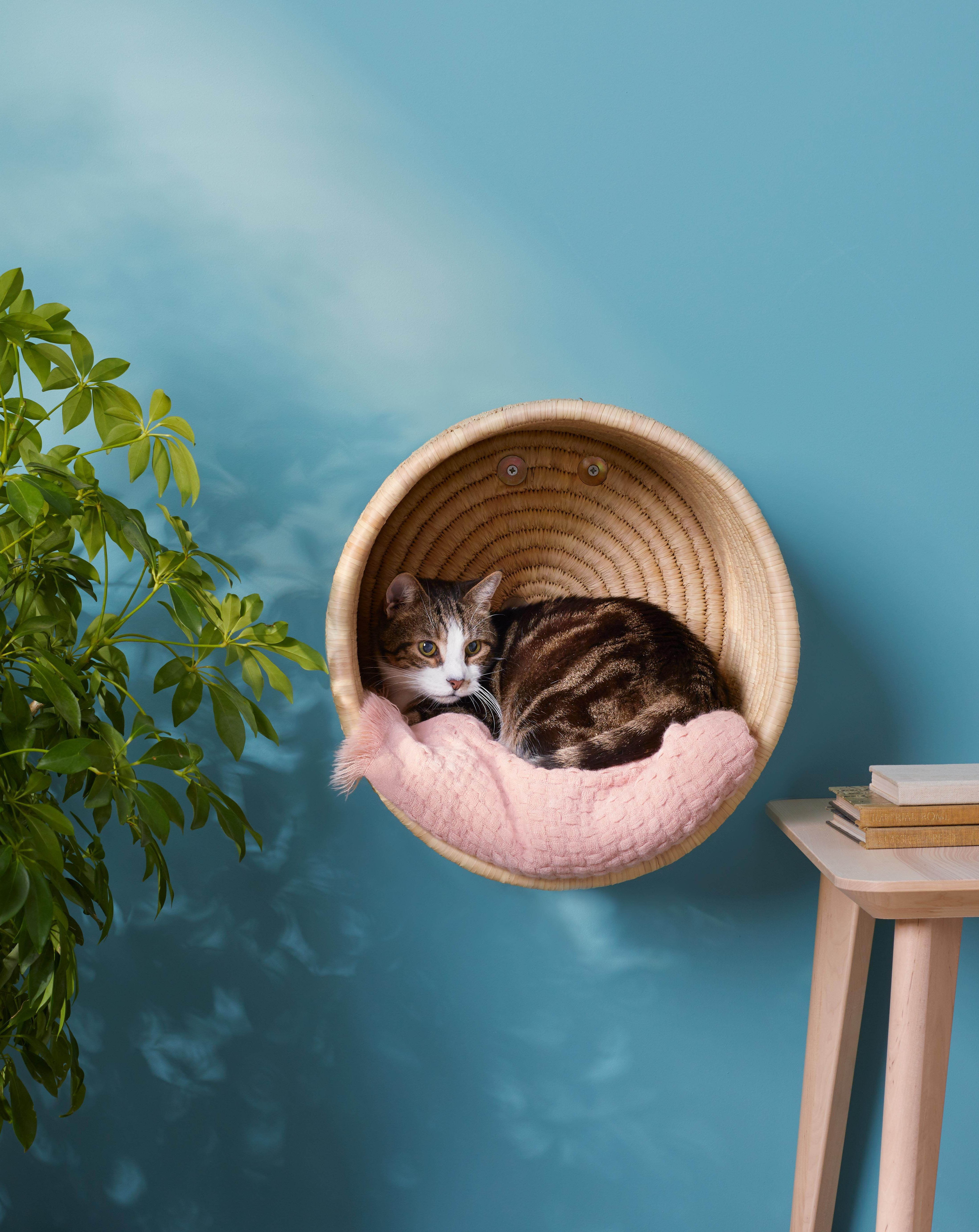 11 Cat Crafts That Are Perfect For Your Feline Friend In 2020 Cat Basket Cat Room Cats