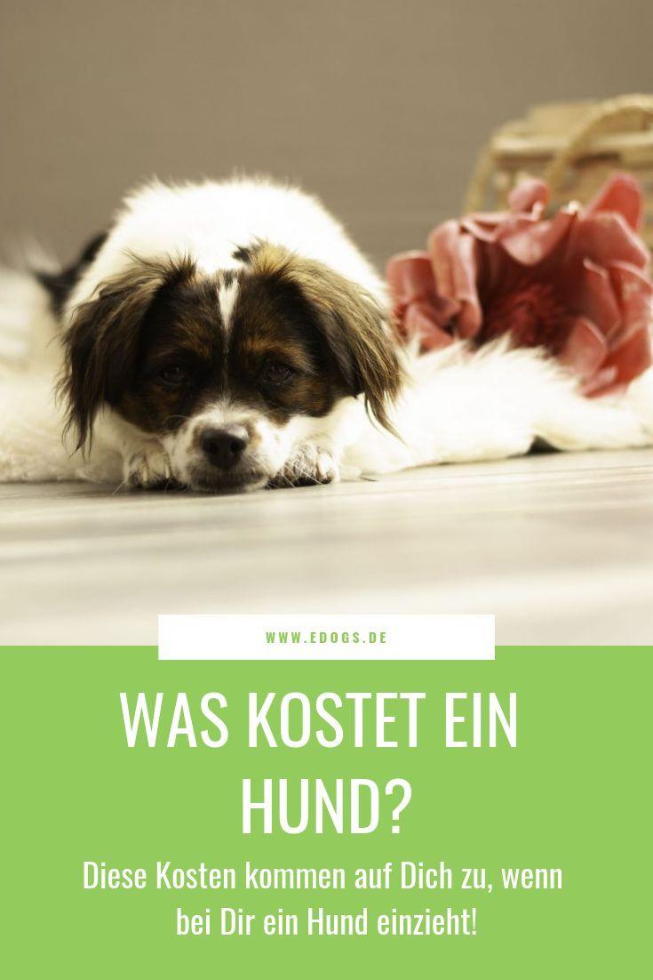 Ein Hund Soll Einziehen Neben Den Anschaffungskosten Bringt Ein Hund Auch Monatliche Kosten Fur Zum Beispiel Futte Welpen Alles Uber Hundewelpen Hunde