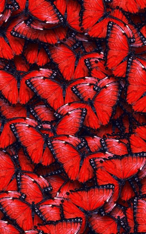 Mobilewallpaper Red Butterfly Red Aesthetic Red Wallpaper