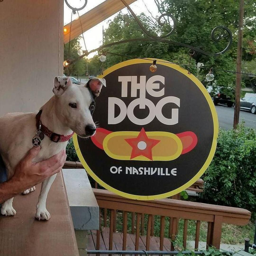 13 Patios Perfect For Your Pup in Nashville Dog