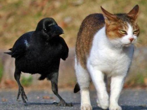 black cat villain