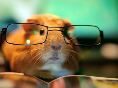 intelligent piggie