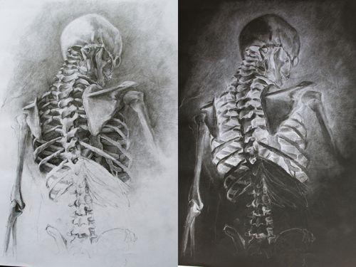Beras Pemasak Apakah Menakjubkan Skeleton Drawings Anatomy Art