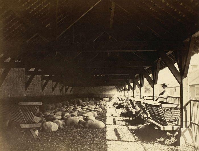 Bergerie de la ferme impériale, juin 1865, tiré en 1866 | Photographe : Ildefonse Rousset