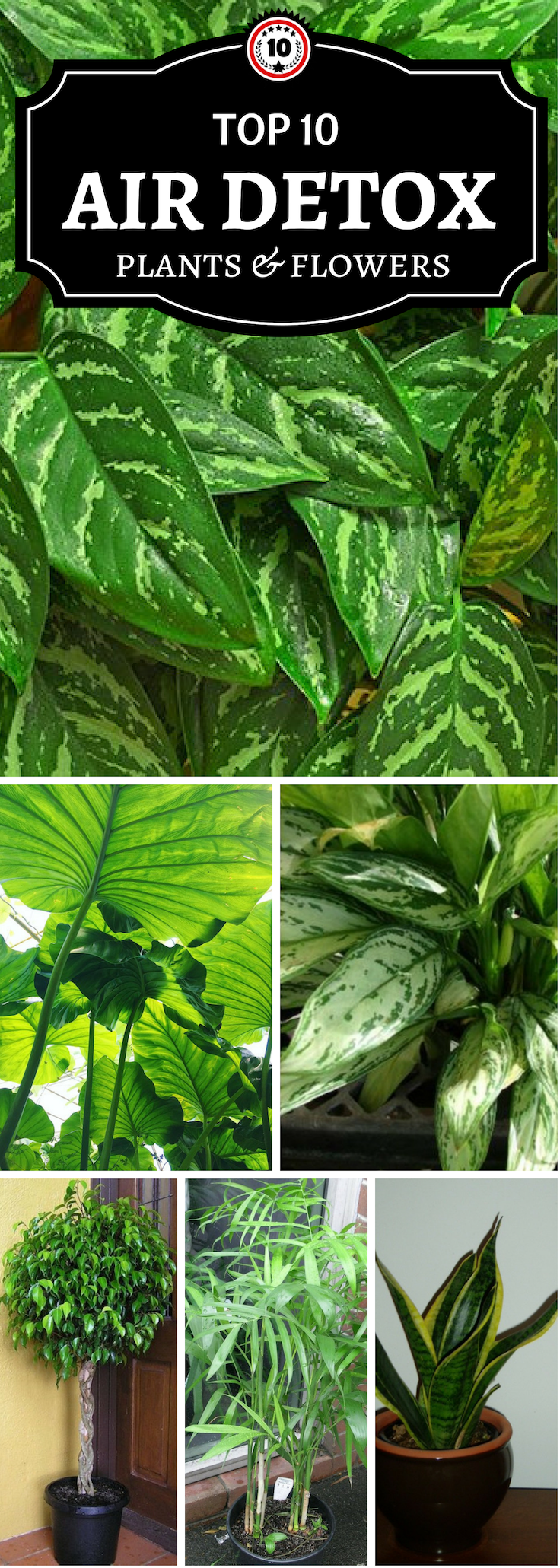 Top 10 Air Detoxifying Plants for Indoor Use | Bathroom ...