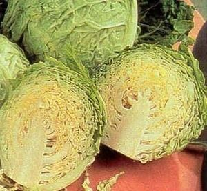 Pase Seeds - Cabbage Golden Acre Vegetable Seeds, $3.29 (http://www.paseseeds.com/cabbage-golden-acre-vegetable-seeds/)