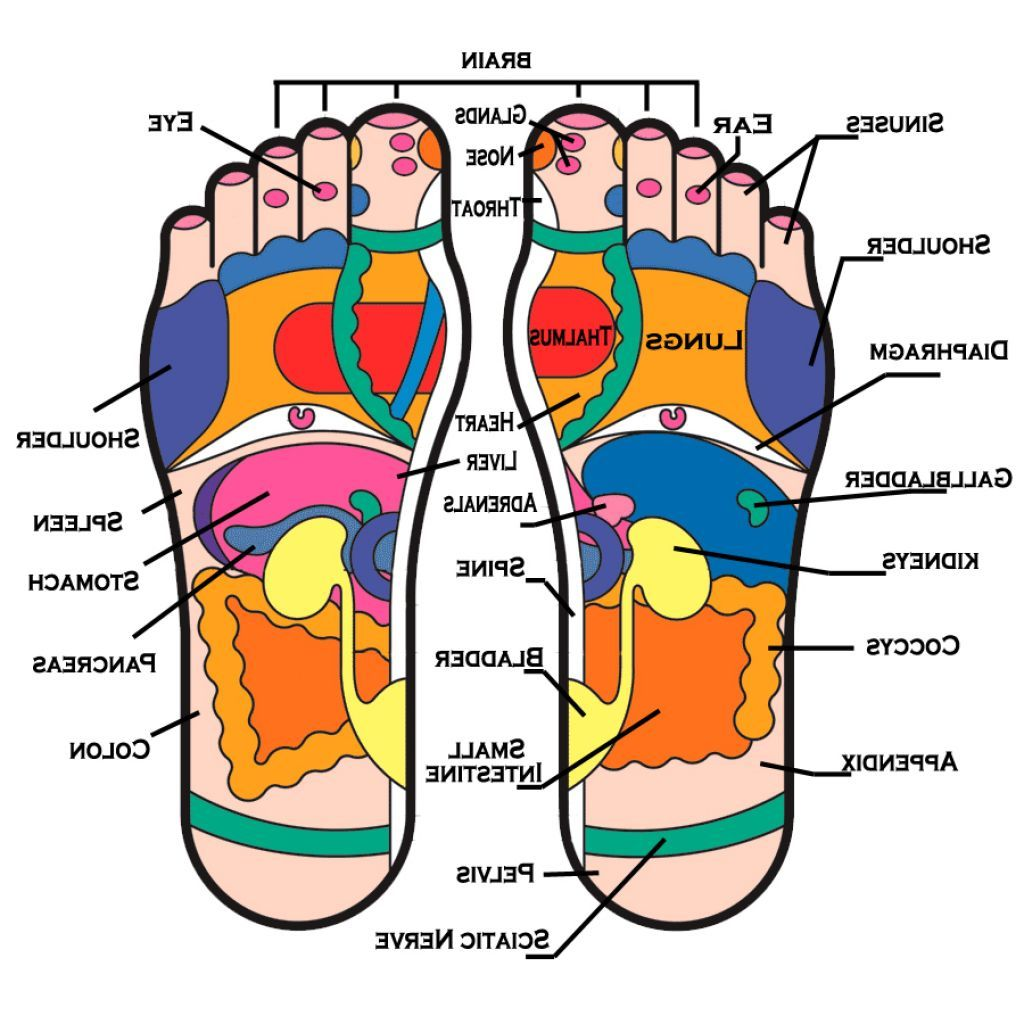 Foot Arch Muscle Anatomy - Anatomy Body Gallery | Health | Pinterest ...