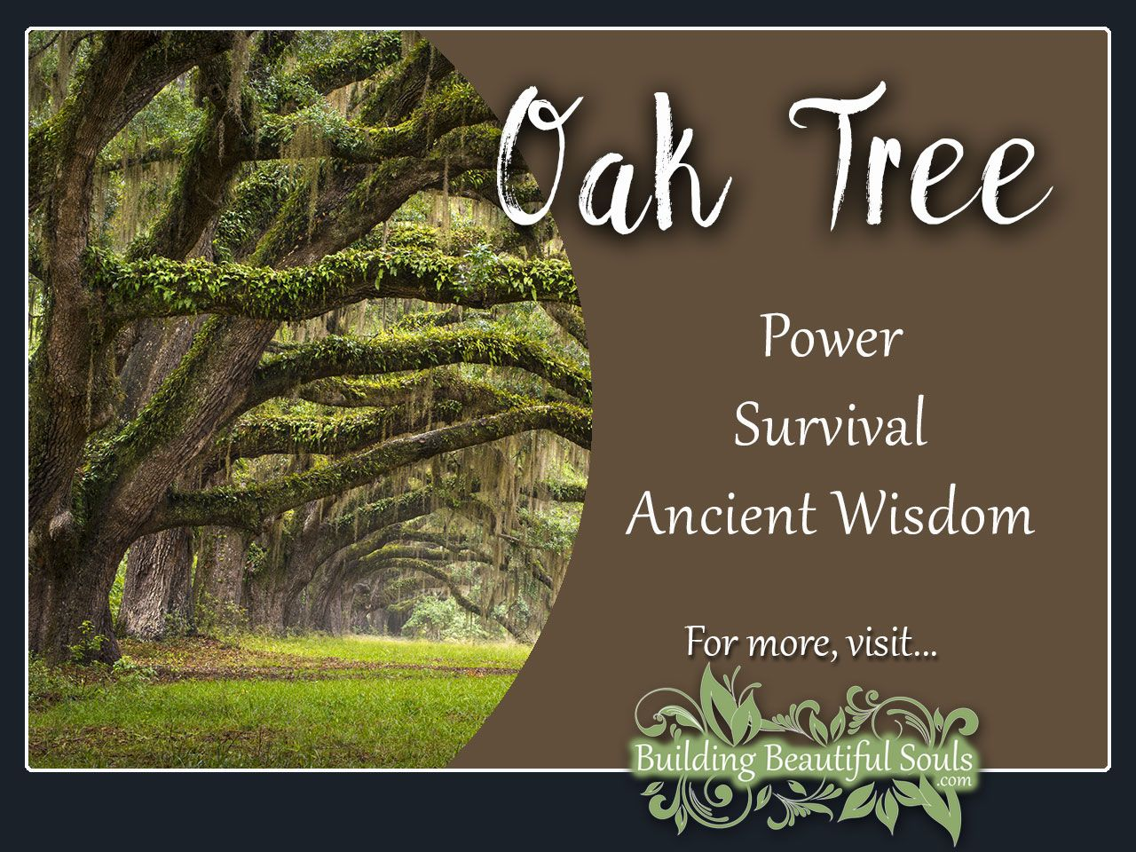 Oak Tree Meaning & Symbolism Tree meanings, Oak tree