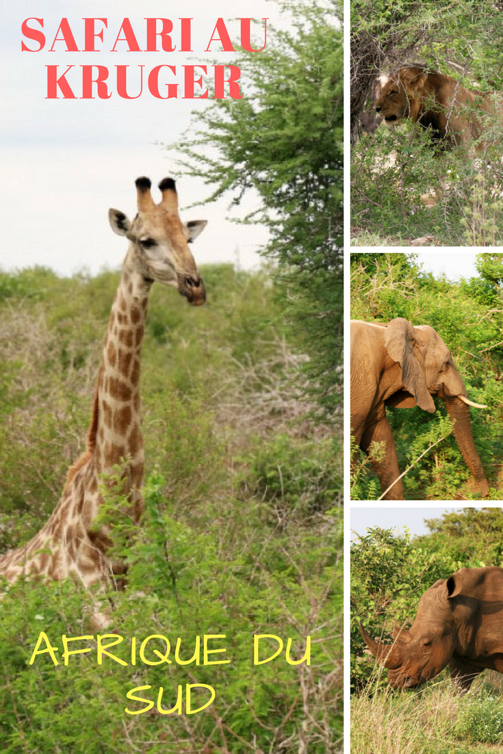 safari photo afrique du sud pas cher