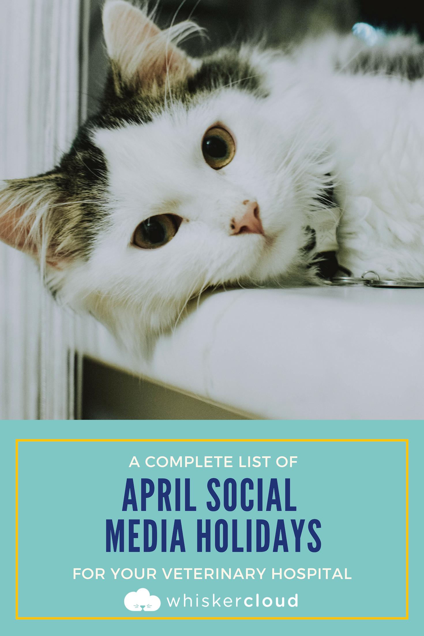 Pin On Veterinary Marketing Tips