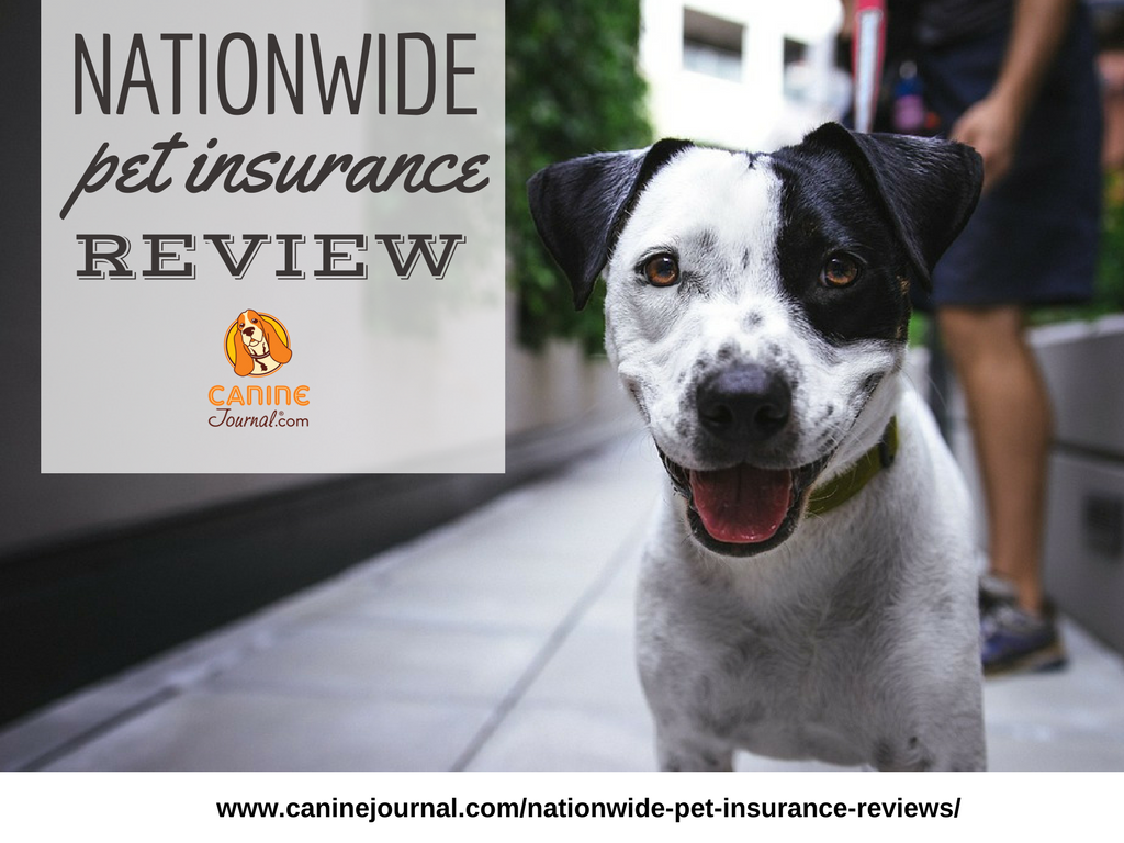 Nationwide Pet Insurance Review How Do They Compare With Images