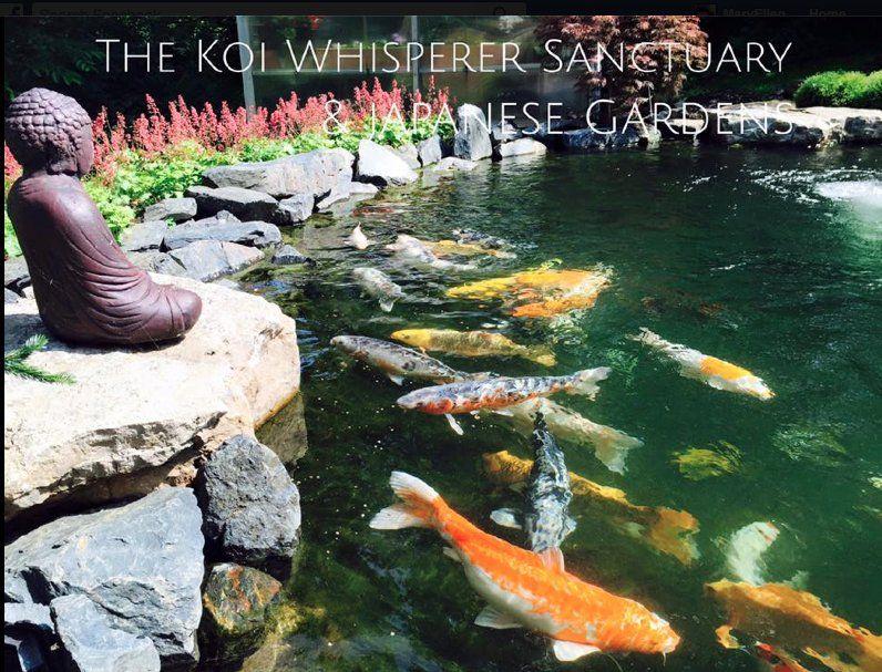 32603791c45b7f2f961267253021aa02 - The Koi Whisperer Sanctuary & Japanese Gardens
