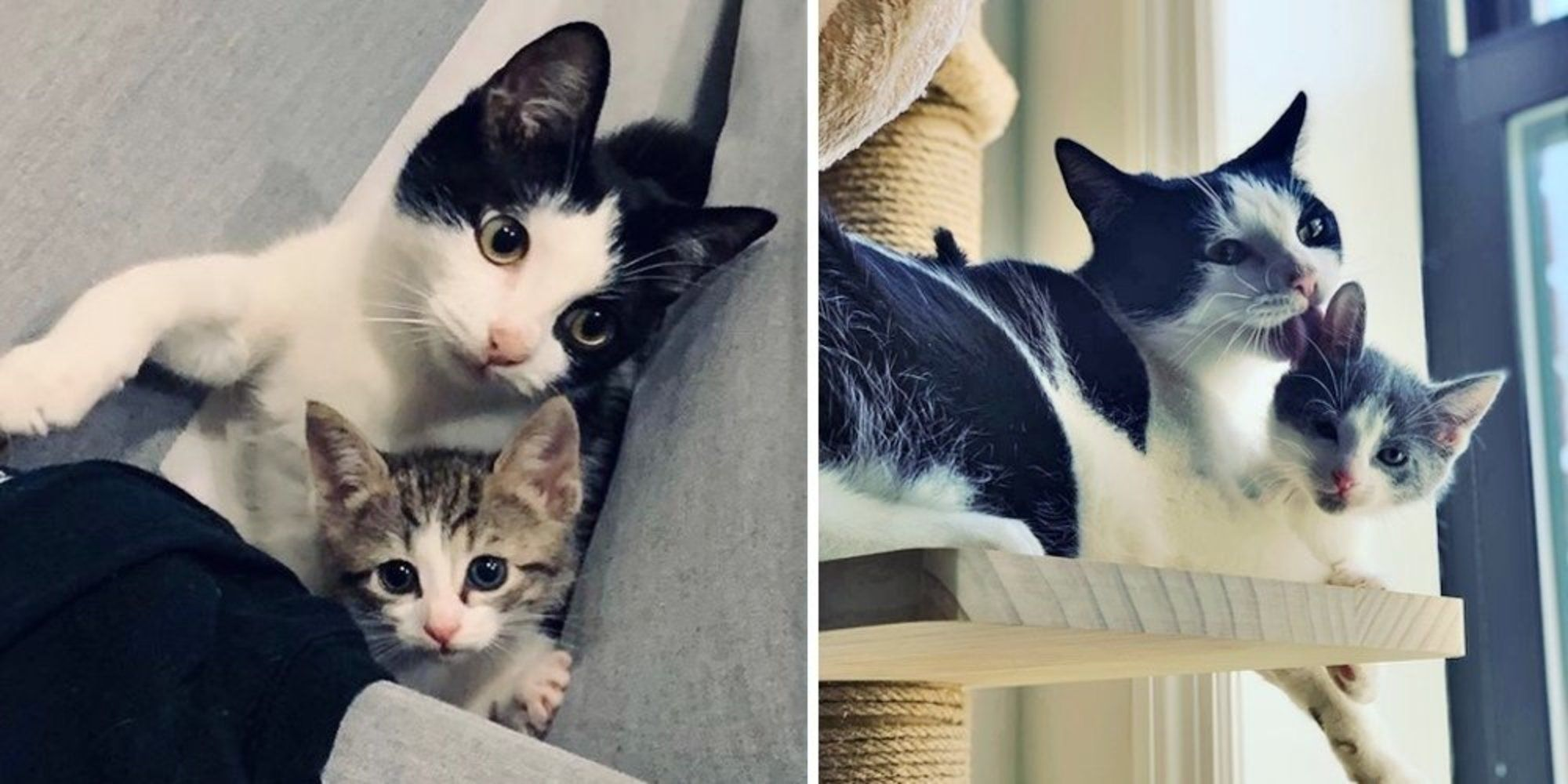 Woman Took Orphaned Kitten Home to Foster But the Tuxedo