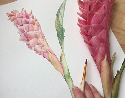Red Ginger Flower Botanical Watercolor Illustration Flower Illustration Ginger Flower Watercolor Tulips