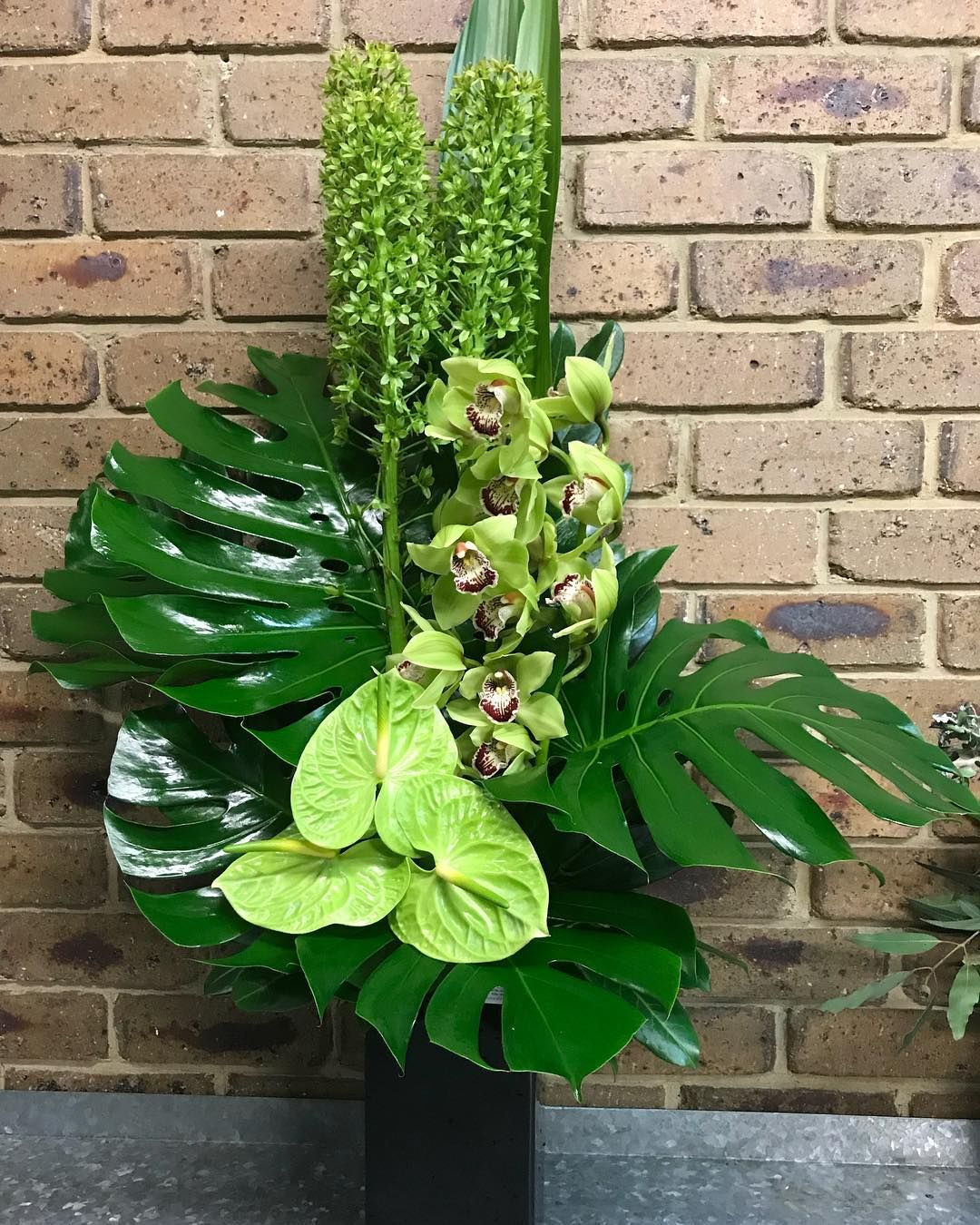 40 Gostos 1 Comentarios Acacia Flowers Acaciaflowers Berwick No Instagram Green Freshblooms Acaciaf Composizioni Floreali Mazzo Di Fiori Fiori