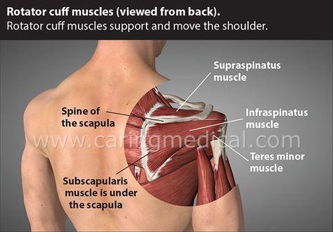 Before you get Rotator Cuff Tear Surgery – Caring Medical | kinesio ...