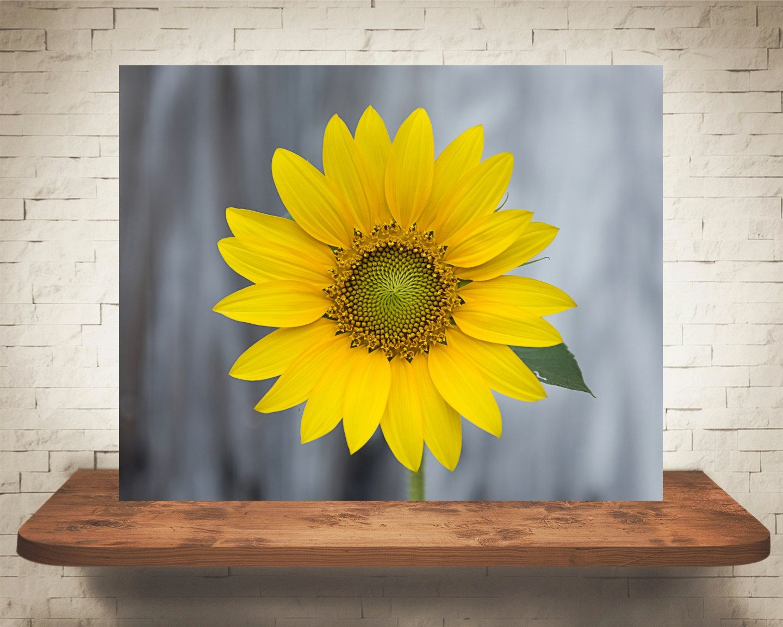 Yellow Sunflower Photograph - Nature Photography - Fine Art Print ...