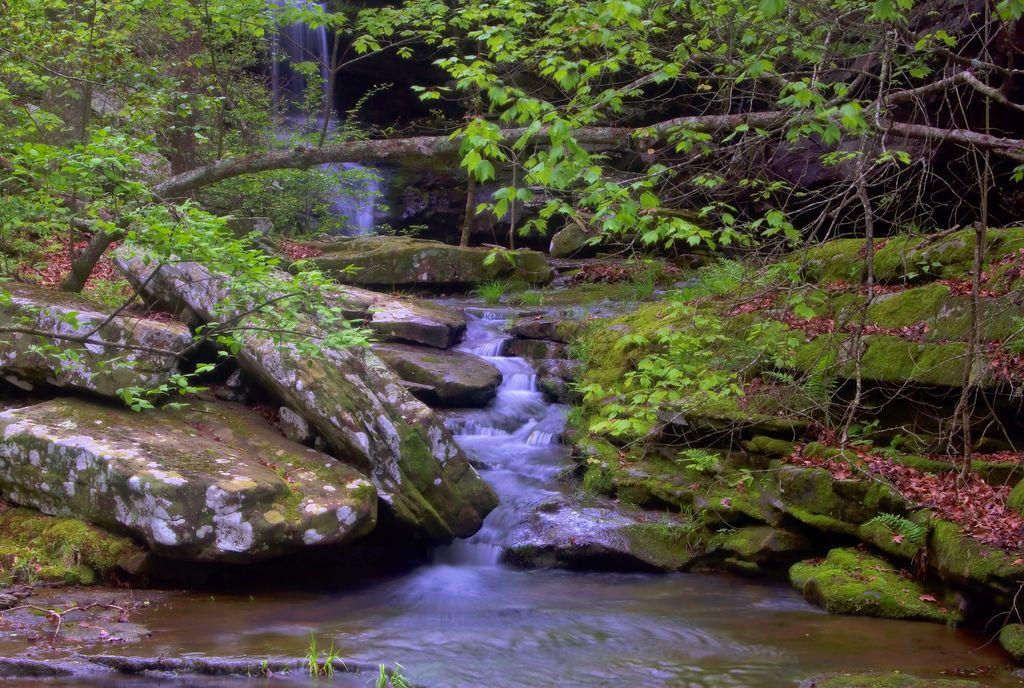 Arkansas es una obra maestra de belleza natural con ríos cristalinos, lagos y riachuelos, montañas, bosques nacionales y campos verdes de cosechas que parecen extenderse hasta el horizonte. Una serie de cuatro centros Naturales están establecidos en el estado, cada uno resaltando la flora y fauna de sus regiones particulares.