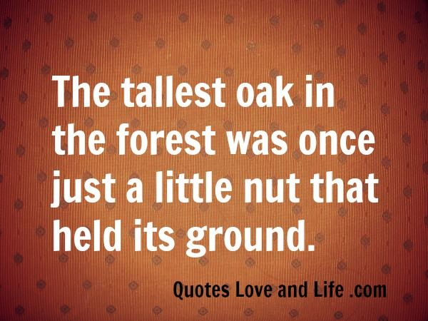 """""""The tallest oak in the forest was once just a little nut that held its ground."""" #motivational #inspirational quote"""